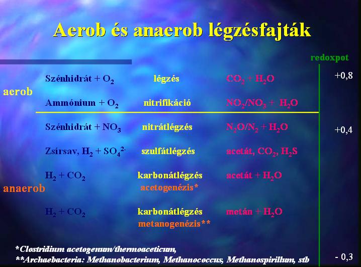 Aerob és anaerob légzésfajták