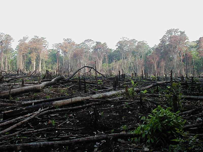 http://www.alternativenergia.hu/wp-content/uploads/2009/11/amazon_deforestation