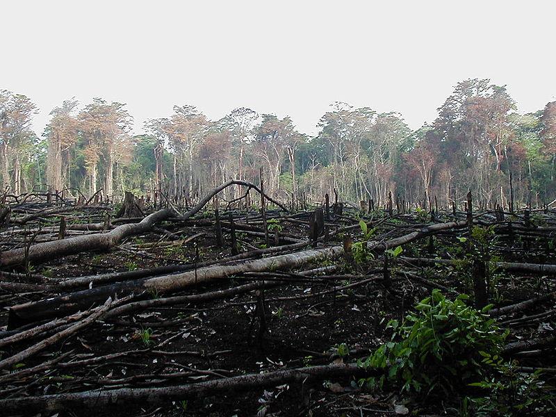 http://www.alternativenergia.hu/wp-content/uploads/2009/11/amazon_deforestation