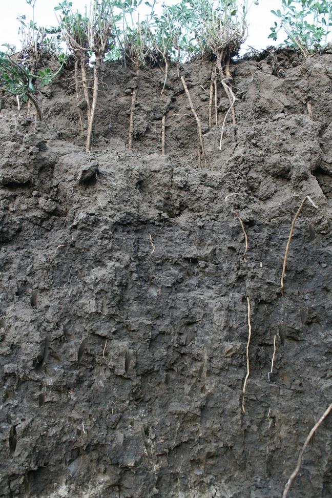 biomassza termelés