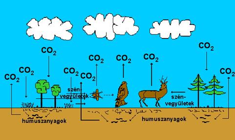 A szén körforgása a természetben