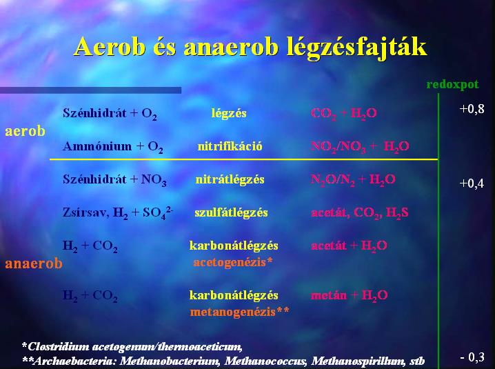Aerob and anaerob respiration types