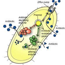 Antibiotikum rezisztencia plazmid