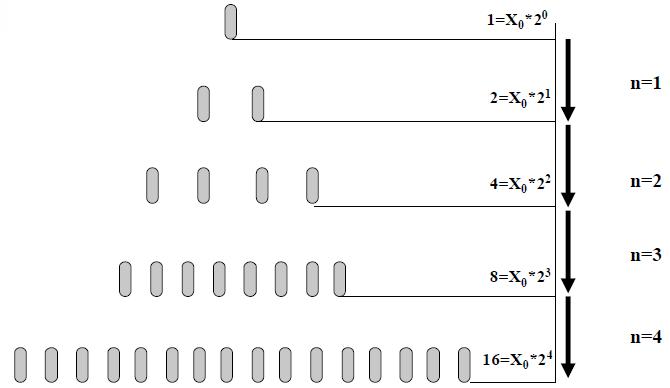 Mikroorganizmusok bináris szaporodása
