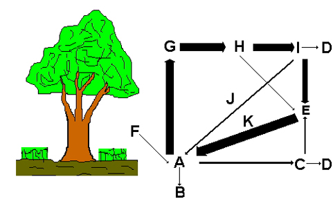 Az erdő anyagforgalmának ökoszisztéma-modellje
