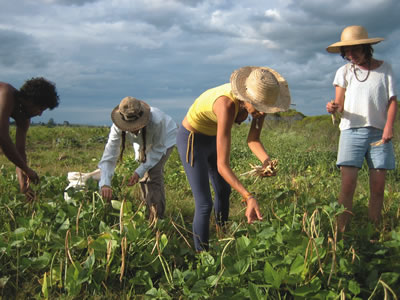 http://www.transitionsabroad.com/listings/work/shortterm/farm_jobs_agriculture.s