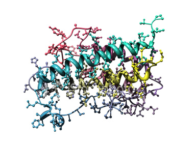 http://www.istockphoto.com/stock-photo-4606038-model-of-human-growth-hormone.php