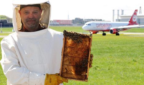 Levegőmonitoring méhekkel