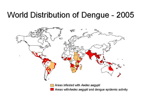 Dangue fever prevalence