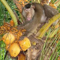 Dolgozó majom