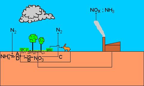 A nitrogén körforgása a természetben