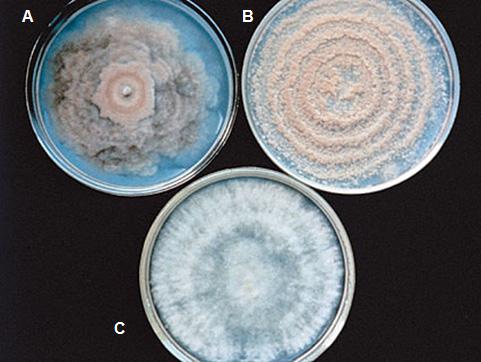 Mikrobatelep