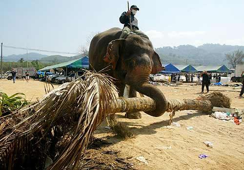 Elefánt-munkás