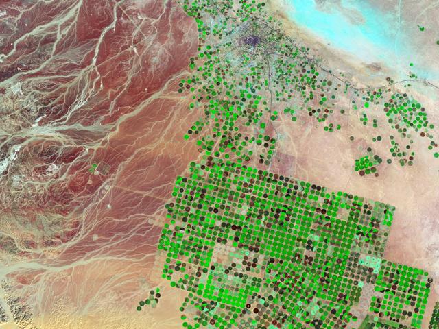 Gabonatermesztés a sivatagban