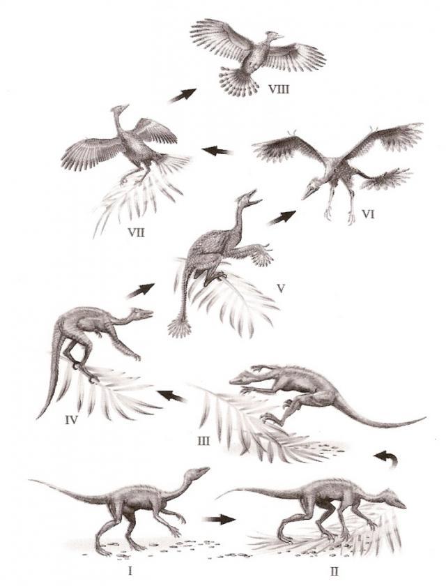 A toll evolúciója