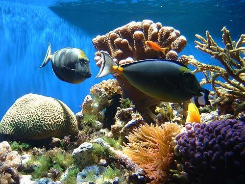 Korall-sziget