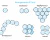 A gömb alakú baktériumok leggyakoribb elrendeződési formái
